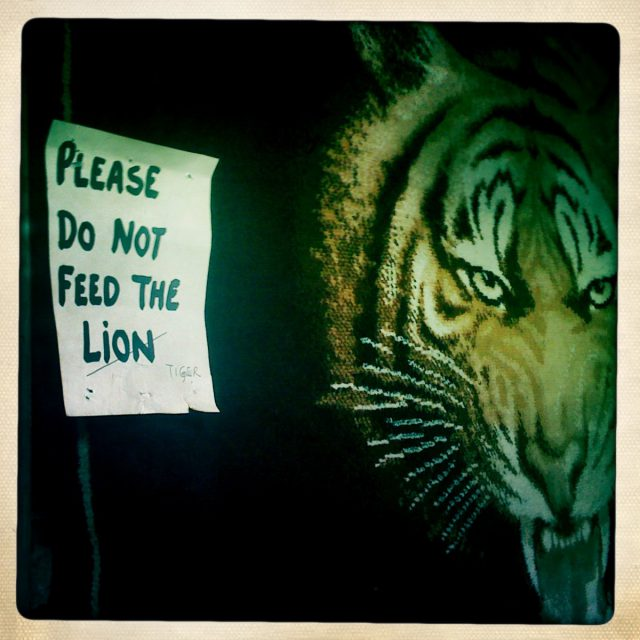 Please do not feed the lion